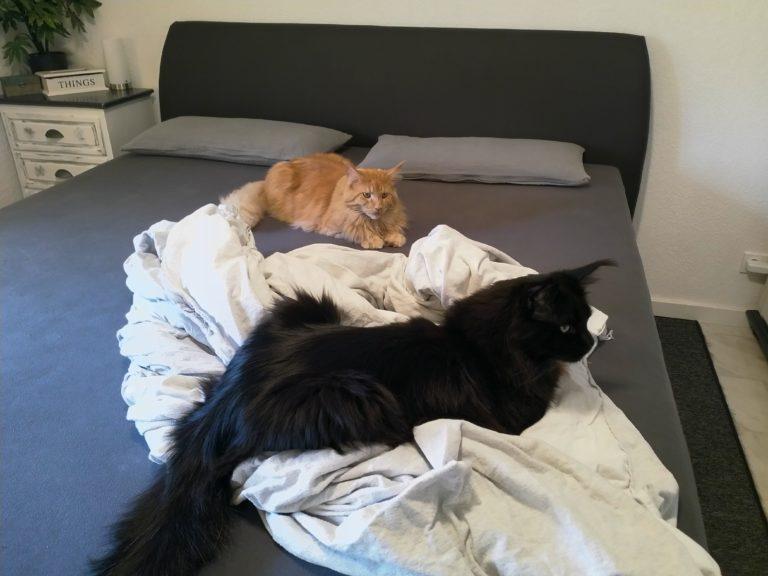 Betten frisch beziehen mit zwei Störenfrieden