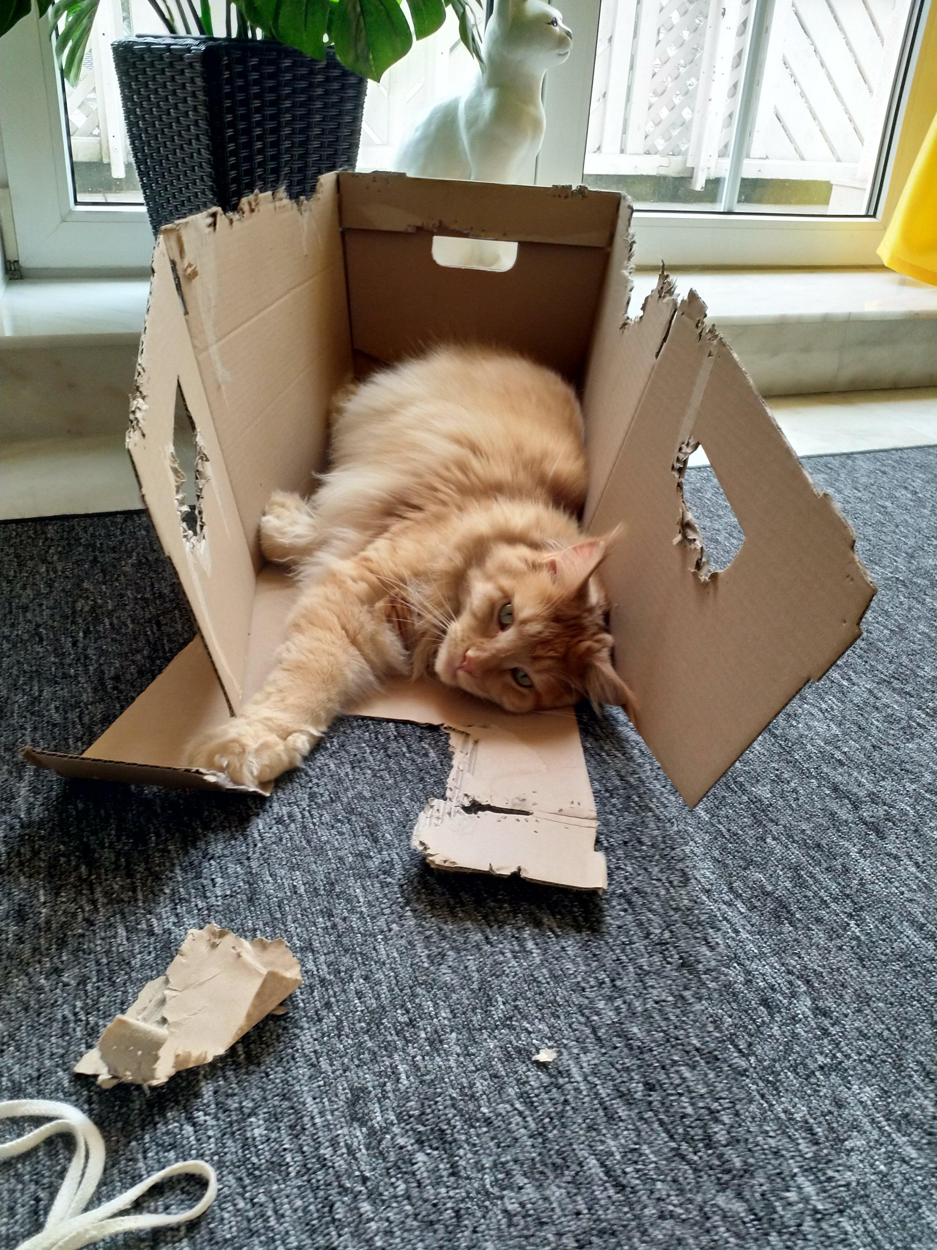 Sunny in der Kiste