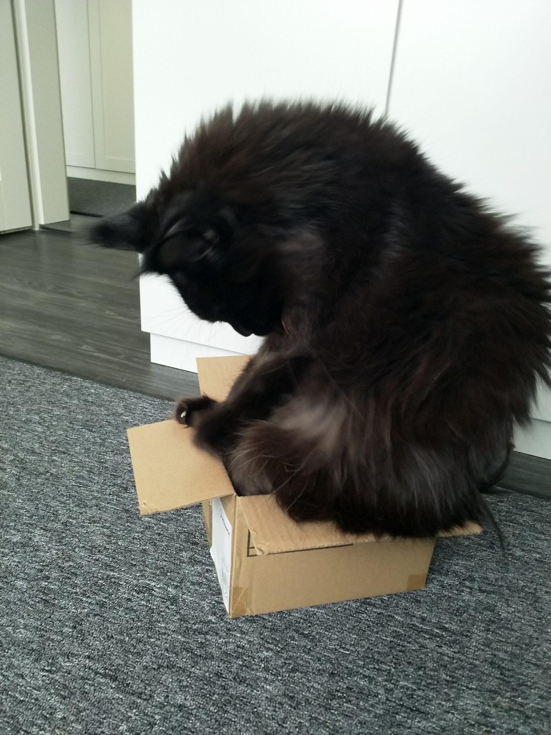kleine Kiste